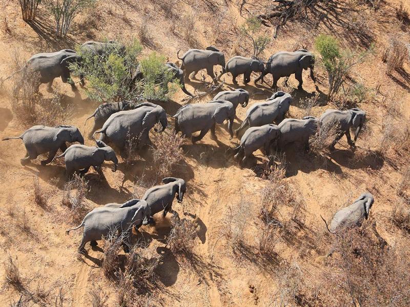 Wildlife-monitoring